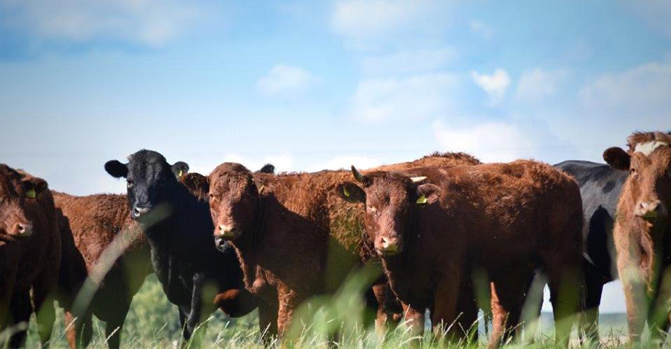 Scotlands Beef Event